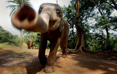 В Китае на людей напал азиатский слон