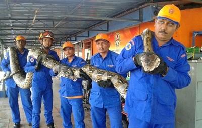 В Малайзии умерла самая длинная в мире змея