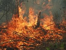 В Житомирской области вторые сутки горят леса