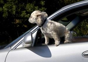 В Новой Зеландии собак учат водить машину