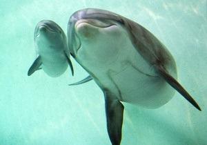 В Ялте открылся центр дельфинотерапии