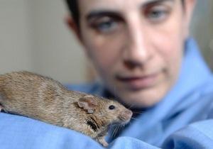 Ученые в Японии клонировали мышь из капли крови