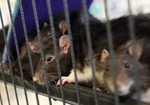 Немецкие защитники животных раскритиковали компьютерную игру из-за убийства крысы