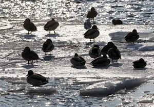 Погода в Украине - паводки - Гидрометцентр предупреждает о подъеме уровня воды в реках Закарпатья