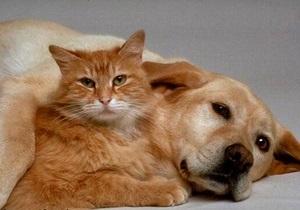Кошки или собаки: ученые пытаются выяснить, кто из животных умнее