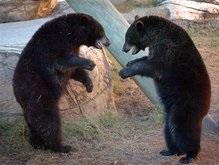 Медведи разодрали посетителя Николаевского зоопарка