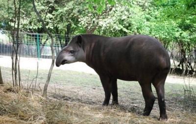 В зоопарке Ровно появилось редкое животное