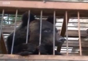 Вертолеты вытащили медведей из воды - видео