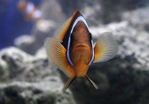 Ученые разгадали секрет тропических рыб