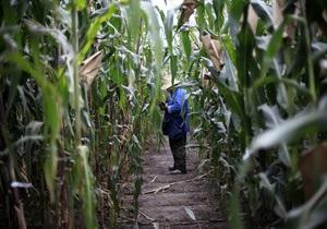 Кукуруза выделяет вещества, которые привлекают полезные микробы