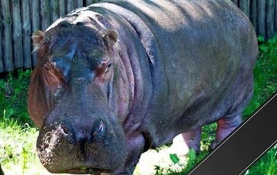 В столичном зоопарке умер старейший бегемот мира