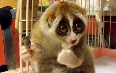 В Черкассах ограбили зоопарк