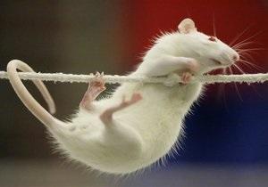 В США успешно завершено испытание вакцины от героина на крысах