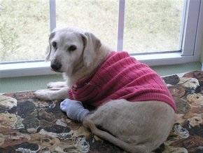 В США умерла самая старая в мире собака