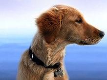 В Сети стартовал аукцион по клонированию собак