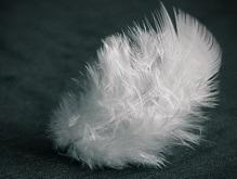 Ученые создали строительный материал из птичьего оперения