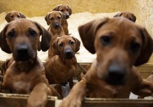 Ученые: Собаки могут защитить детей от астмы