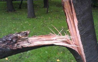 На Волыни ураган убил мужчину