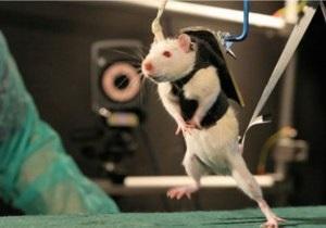 Парализованных мышей научили подниматься по лестнице