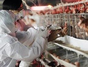 Вирус птичьего гриппа выявлен у полуторагодовалого египтянина