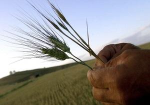 Минагрополитики прогнозирует в Украине рекордный урожай зерновых
