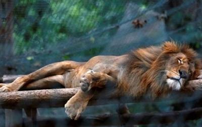 В венесуэльском зоопарке около 50 животных умерли от голода