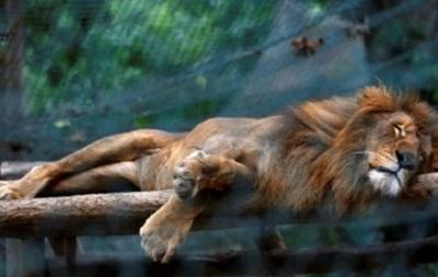 В зоопарке в Венесуэле за полгода от голода умерли полсотни животных