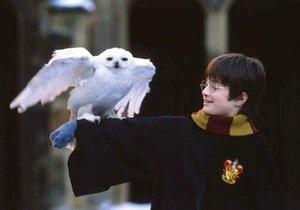 Из-за Гарри Поттера в Индии погибают совы