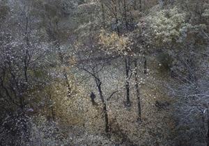 Синоптики: На следующей неделе в Украине начнется резкое похолодание