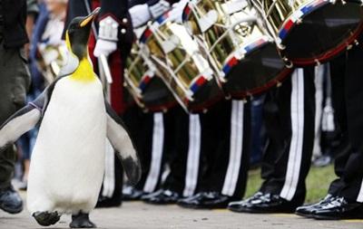 Пингвин дослужился до генерала в норвежской гвардии