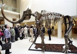 Российские школьники обнаружили останки мамонта