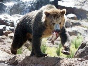 В эту субботу в Киевском зоопарке отпразднуют День медведя