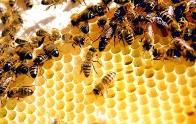 2,5 миллиона пчел случайно уничтожили в Южной Каролине