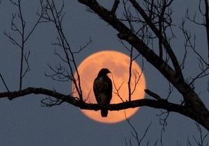 Исследование: Чернобыльская радиация наиболее опасна для птиц с оранжевым оперением