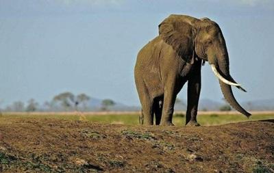 На конференции в ЮАР не могут договориться о защите слонов