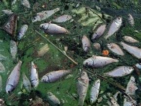 В Житомирской области зафиксировали массовую гибель рыбы