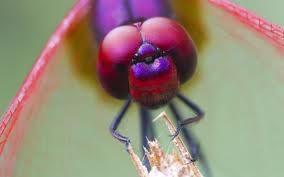 Панорамный вид. Ученые создали искусственный глаз насекомого