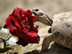 В Киевском зоопарке отпразднуют День черепахи