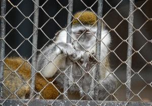 СМИ: В столичном зоопарке исчезло до 70% животных