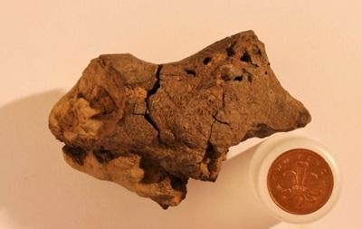 Ученые впервые обнаружили окаменелый мозг динозавра