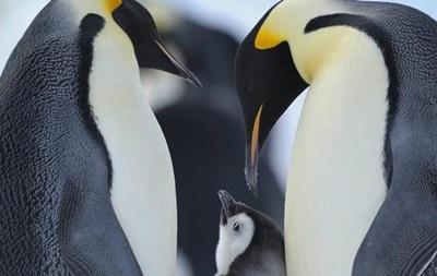 В Антарктике появится крупнейший на планете морской заповедник