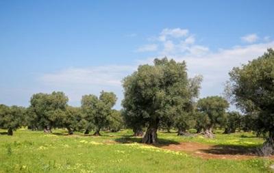 Глобальное потепление может превратить юг Испании в пустыню