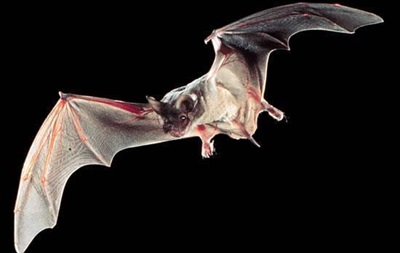 Обнаружен самый быстрый летун среди животных
