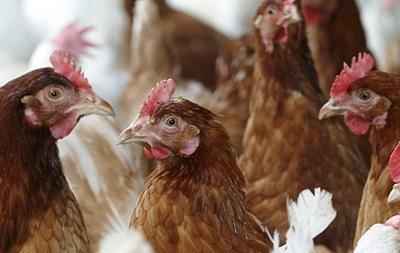 Украина запретила птицу из Болгарии и Венгрии
