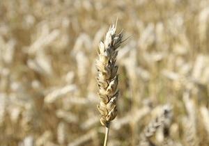 Россия рассчитывает экспортировать в этом году больше зерна, чем Украина