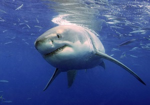 Ученые изучили рацион белых акул по химическому составу их позвонков