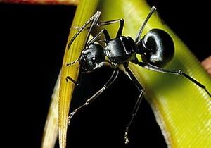 Биологи уличили хищное растение в сотрудничестве с муравьями