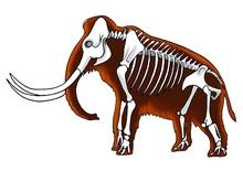 Археологи обнаружили череп редкого степного мамонта
