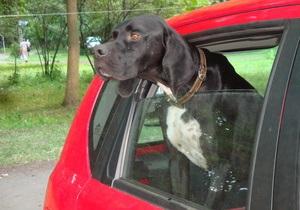 Фотогалерея: Асы охоты: Всеукраинская выставка охотничьих собак