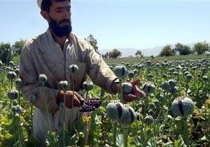 ООН: В Афганистане резко снизился урожай опийного мака
